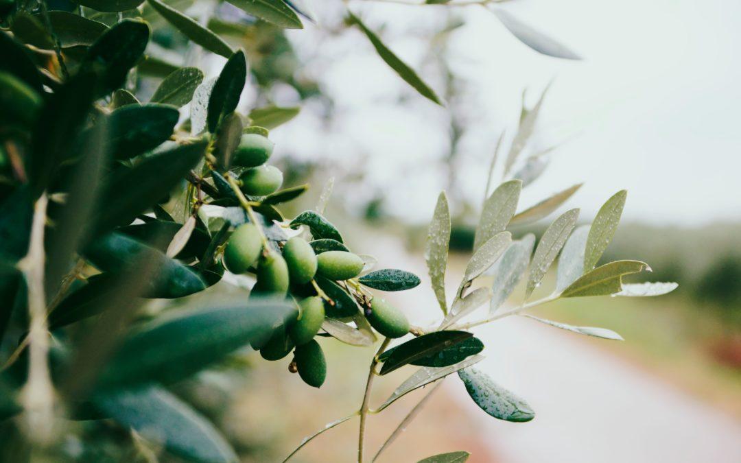 El aceite de oliva y las almendras, máxima calidad en materias primas.